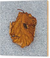 Leaf On Granite 11 - Square Wood Print