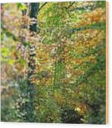 Leaf Path  Wood Print