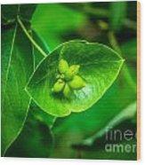 Leaf With Seeds Wood Print