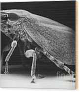 Leafhopper Wood Print by David M. Phillips