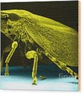 Leafhopper, Sem Wood Print