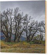 Leafless Trees Wood Print