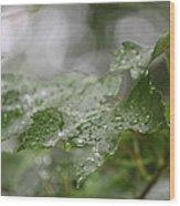 Leafy Raindrops Wood Print