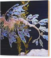 Leafy Sea Dragon - Seahorse Wood Print