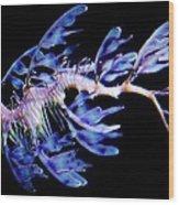 Leafy Sea Dragon Wood Print by Paulette Thomas