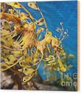 Leafy Sea Dragon Phycodurus Eques. Wood Print