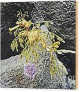 Leafy Seadragon Wood Print