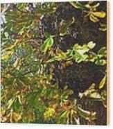 Leafy Tree Bark Image Wood Print