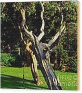 Leaning Cedars Of West Chop Wood Print