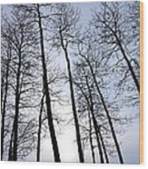 Leaning Tall Wood Print