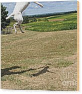 Leap Higher Wood Print