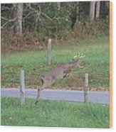 Leaping Buck In Smoky Mountains Wood Print by Dan Sproul