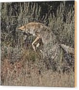 Leaping Coyote Wood Print