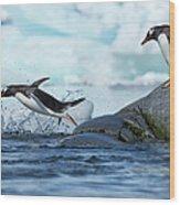 Leaping Gentoo Penguins, Antarctica Wood Print