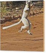 Leaping Lemur Wood Print