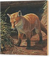 Red Fox Pup - Learning Wood Print by Crista Forest