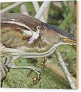 Least Bittern Female Feeding Wood Print