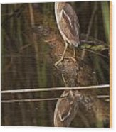 Least Bittern Pictures 17 Wood Print