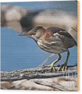 Least Bittern Pictures 7 Wood Print