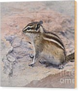 Least Chipmunk #2 Wood Print