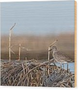 Least Sandpiper Morning Wood Print