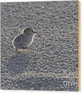 Least Tern Chick Wood Print
