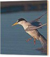 Least Tern In Flight Wood Print