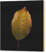 Leaves - A Golden Trio Wood Print by James Hammen
