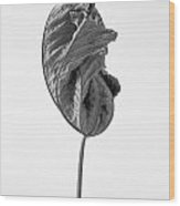 Leaves After Life - Nineteen Wood Print