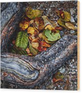 Leaves And Root Wood Print