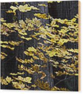 Leaves And Trees Wood Print