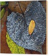 Leaves At Oak Openings Wood Print
