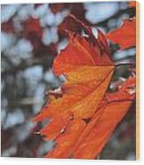 Leaves Backlit 3 Wood Print