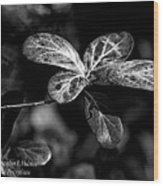Leaves - Bw Wood Print