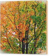 Leaves Changing Colors Wood Print