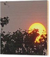 Leaves Cradling Setting Sun Wood Print