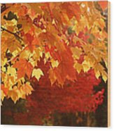 Fall Leaves In Afternoon Sun Wood Print