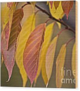 Leaves In Fall Wood Print