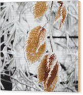Leaves In The Frost Wood Print