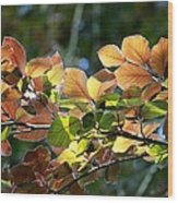 Leaves Of Light Wood Print by Tim Rice