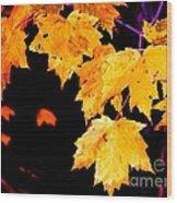 Leaves Of Maple Wood Print