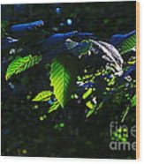 Leaves Of Shining Wood Print by Tim Rice