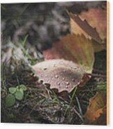 Leaves Of The Aspen Wood Print