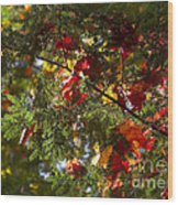 Leaves On Evergreen Wood Print