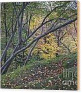 Ledges Overlook Trail 6 Wood Print