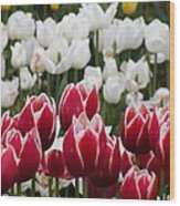 Leen Van Der Mark Tulips Wood Print