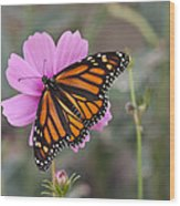 Legend Of The Butterfly - Monarch Butterfly - Casper Wyoming Wood Print