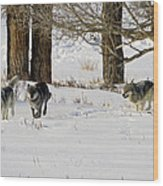 Legends Of The Lamar Valley Wood Print