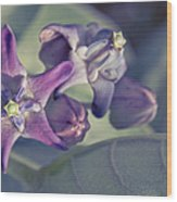 Lei Pua Kalaunu - Crown Flower - Calotropis Gigantea Wood Print