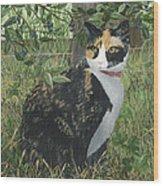 Leia Cat In Blueberries Wood Print